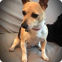 Adopt A Pet :: Lillie - Dallas, TX