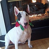 Adopt A Pet :: Miller - Manassas, VA