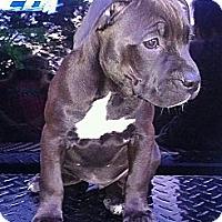 Adopt A Pet :: Reese - Roaring Spring, PA