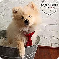 Adopt A Pet :: Bear - Omaha, NE