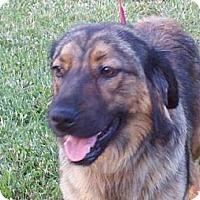Adopt A Pet :: Brandi - Brattleboro, VT