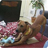 Adopt A Pet :: Dylan - Antioch, IL
