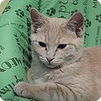 Adopt A Pet :: Virgil - Byron Center, MI