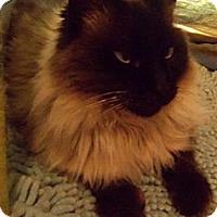 Adopt A Pet :: Caedmon - Ennis, TX
