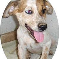 Adopt A Pet :: Kianna - Phoenix, AZ