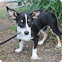Adopt A Pet :: Betsie - Fountain, CO