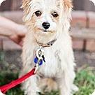 Adopt A Pet :: Corey