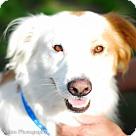 Adopt A Pet :: Gill