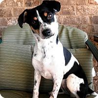 Adopt A Pet :: Zummie - Homewood, AL