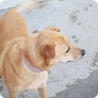 Adopt A Pet :: Hailey - Mira Loma, CA