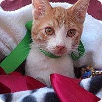 Adopt A Pet :: Cheddar - Scottsdale, AZ