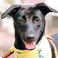 Adopt A Pet :: Judith - San Francisco, CA
