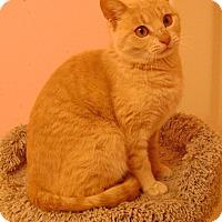 Adopt A Pet :: Smitten - Covington, KY