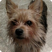 Adopt A Pet :: Lukas - Willingboro, NJ