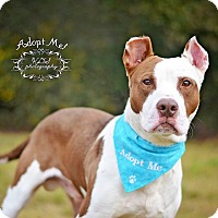 Adopt A Pet :: Jimmy - Fort Valley, GA