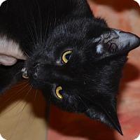 Adopt A Pet :: Vader - Glendale, AZ