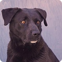 Adopt A Pet :: Rocky - Lincolnton, NC