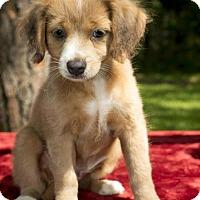Adopt A Pet :: Blaze - Alvin, TX
