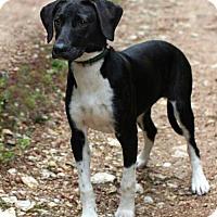 Adopt A Pet :: Bella - Burbank, OH
