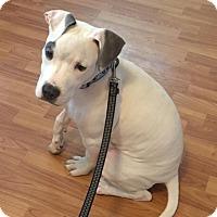Adopt A Pet :: Evan - Windsor, VA