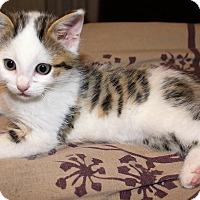 Adopt A Pet :: Otis - Jefferson, NC
