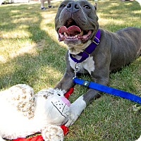 Adopt A Pet :: Blue Hippo - Worcester, MA