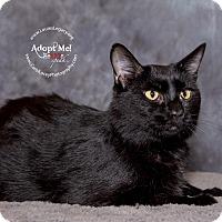 Adopt A Pet :: Nori - Cincinnati, OH