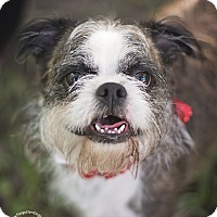 Adopt A Pet :: Shady - Houston, TX
