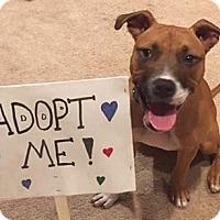 Adopt A Pet :: Alice - Livonia, MI