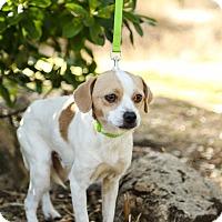 Adopt A Pet :: Gordon - Auburn, CA