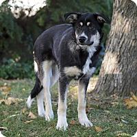 Adopt A Pet :: ARKA - Ile-Perrot, QC
