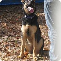 Adopt A Pet :: Delilah - Voorhees, NJ