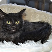 Adopt A Pet :: Heidi - Michigan City, IN