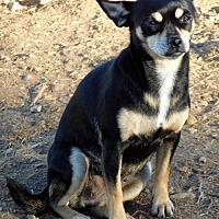 Adopt A Pet :: Sophie - Spartanburg, SC