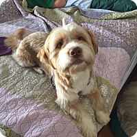 Adopt A Pet :: Tobias - Windermere, FL