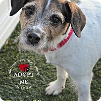 Adopt A Pet :: Molly - Youngwood, PA