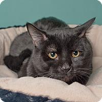Adopt A Pet :: Bear - Wilmington, DE