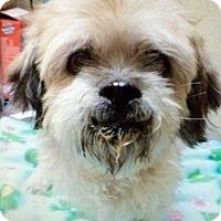 Adopt A Pet :: John - Lancaster, PA