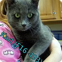 Adopt A Pet :: Karl - Tiffin, OH