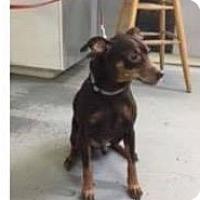 Adopt A Pet :: Milo - Newport, KY