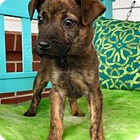 Adopt A Pet :: Paprika - Staunton, VA