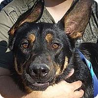 Adopt A Pet :: Guardian - Ashland, OR