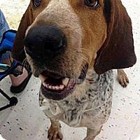 Adopt A Pet :: Samson - Richmond, VA