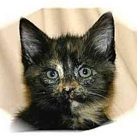 Adopt A Pet :: Lola - Montgomery, IL
