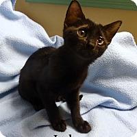 Adopt A Pet :: Jack - Bentonville, AR