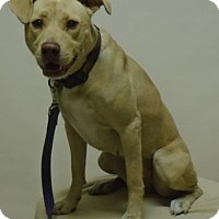 Adopt A Pet :: Sandy - Gary, IN