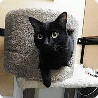 Adopt A Pet :: Boo-Boo - Riverside, CA