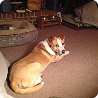 Adopt A Pet :: Deacon (courtesy listing) - Richmond, VA