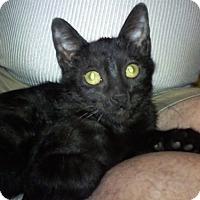 Adopt A Pet :: Jaipurr - North Highlands, CA