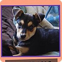 Adopt A Pet :: Twix - Hagerstown, MD